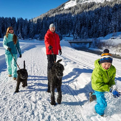 Winter holidays with dogs in Lech